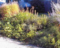 grasses and perennials slope